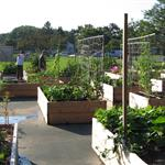 Ashland Community Gardens at Stone Park
